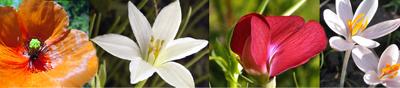 plantes herbari