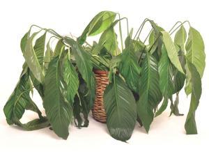 planta-bonita1